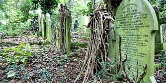 NESTEN 200 ÅR: Den private kirkegården Highgate Cemetery stammer tilbake til det 19. århundre.