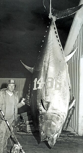 USLÅELIG? Det spørs om Ken Frasers verdensrekord på makrellstørje noensinne vil bli slått. Bestanden er kritisk overfisket, og det er svært mye vann mellom de store.