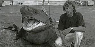 DIGERT BEIST: Gjeldende IGFA-rekord på kamtannhai på kaia på Ascension der det årlig tas individer på rundt 600 kg. Mannen til høyre er ikke fangstmannen Clemens Rump.