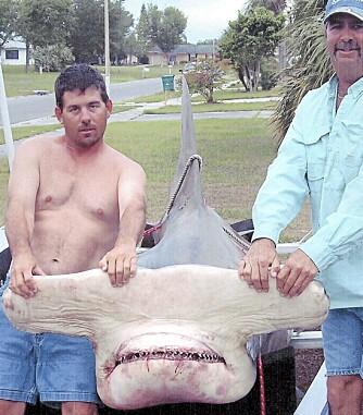 SMIL: Clyde Bucky Dennis (t.v.) og rekordhammerhaien på 581 kg som endte sine dager på en marinbiologisk stasjon i Sarasota, Florida.