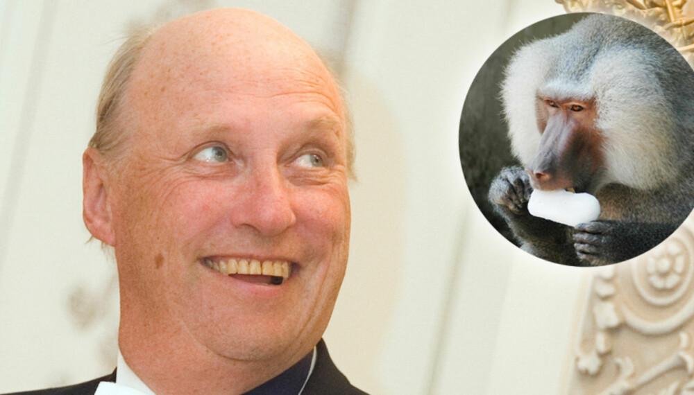 APENES KONGE: Kong Hqarald fikk seg en god latter, da han delte highway med en vaskeekte bavian fra flyplassen i Minneapolis.