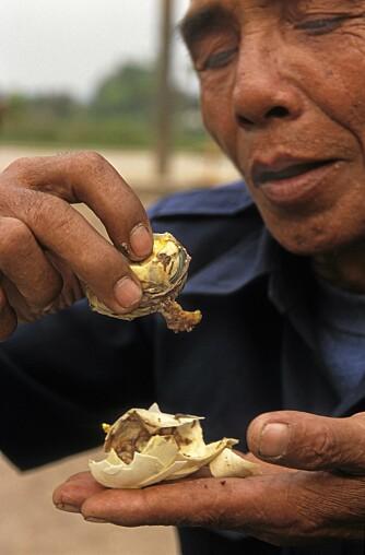 Sjåføren min under en reise i Laos gumler innpå et egg, hvor andungen med fjær og nebb er midtpunktet.