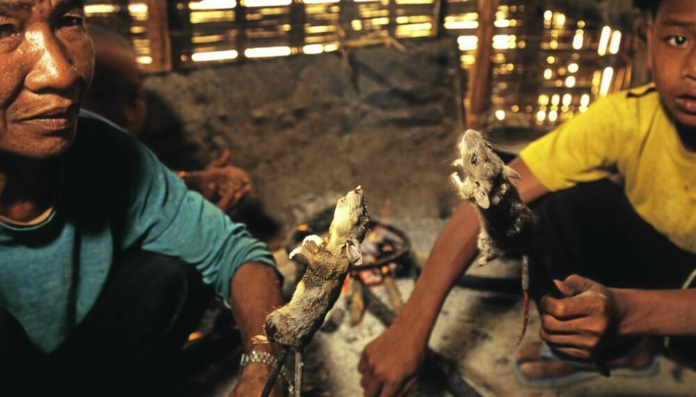 Nyfangede rotter er klare for å tilberedes på et ¿kjøkken¿ i Laos.