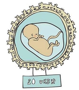 HALVVEIS: Når du er 20 uker på vei er du halvveis i svangerskapet.