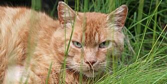ØYEHØYDE: Med små dyr kan man legge seg ned for å få riktig perspektiv. Da belønnes man ofte også med blikk-kontakt.