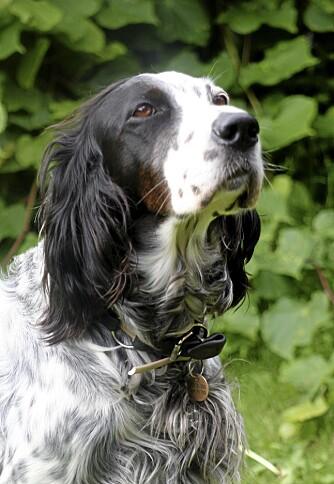 KLASSISK PORTRETT: Stor blender gir uklar bakgrunn, og hundenes ansikt får full oppmerksomhet.