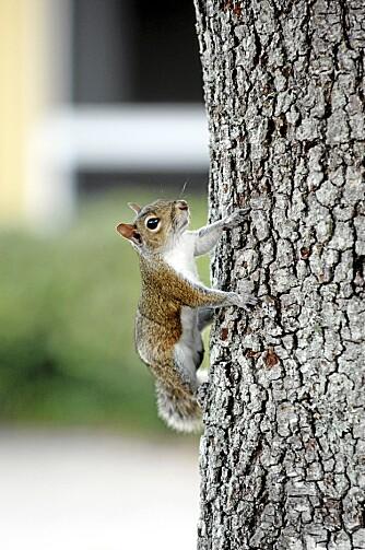 I LOKALMILJØET: Smådyr i bebodde område lar ofte mennesker komme ganske nærme. Husk: Ingen brå bevegelser!