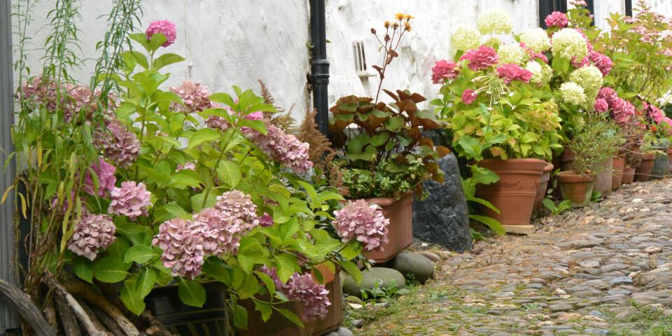 PLANTE BLOMSTER: Å plante blomster i krukker og potter er, ifølge ekspertene, enklere enn å holde styr på blomsterbed. Foto: Gettyimages.com.