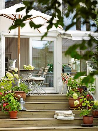 Trappetrinnene fra terrassen til hagen er fine sitteplasser, og egner seg godt for krukker og blomster av alle slag.