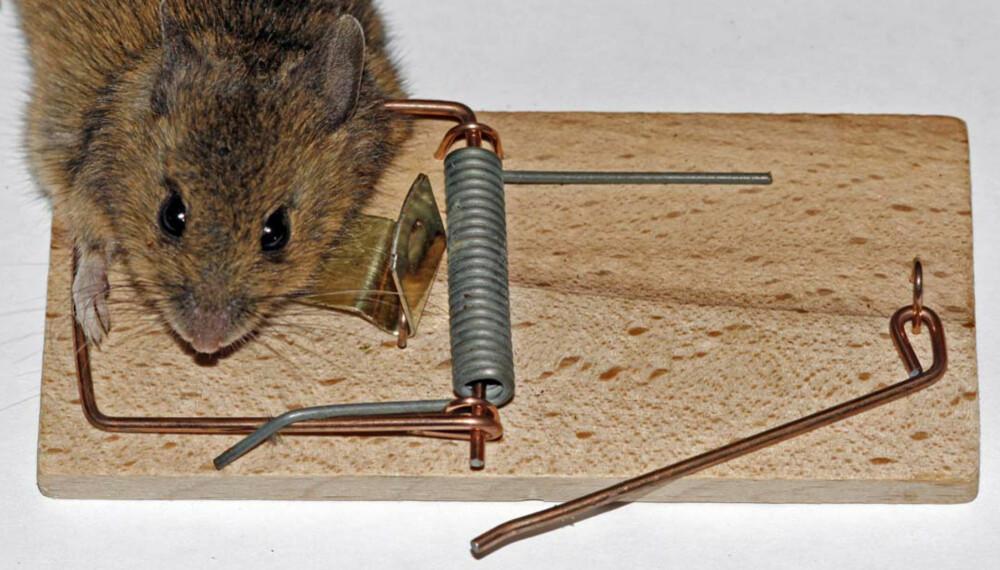 Mouse Traps.