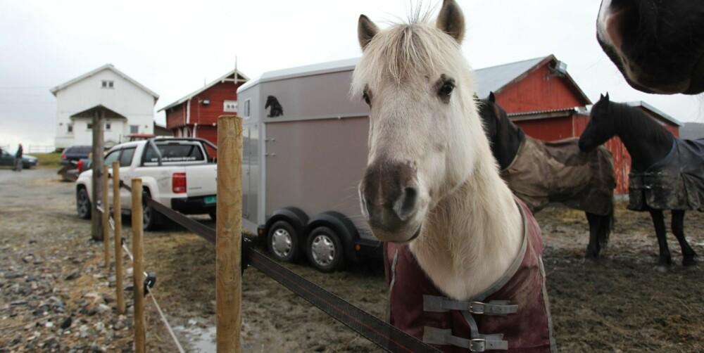 HVA JEG SYNES? Arbeidshester er de kanskje, men det er nå bare jeg som er en ekte hest.