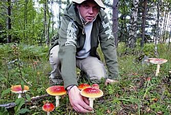PASS OPP: Rødfluesopp vet de fleste at er giftig ¿ og ikke skal plukkes. Men det er andre sopper i skogen som er farligere, selv om de ikke på samme måte skriker ut at de er giftige.