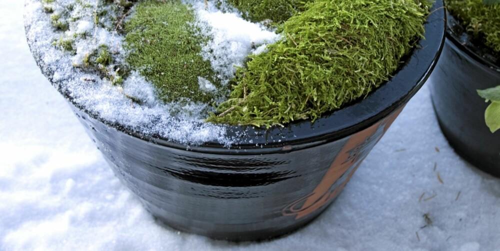 VÅRHAGEN: Selv om vinteren ligger i de fleste hager, er tiden inne for å tenke grønt.