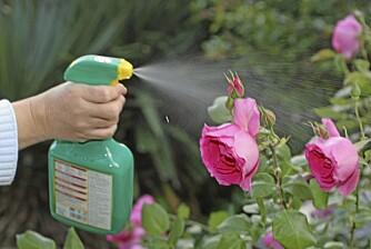 GJØDSLING: Både planter og gress trenger næring i vekstsesongen.