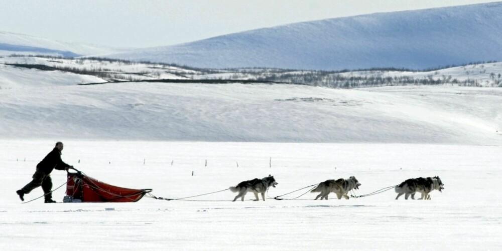 HUNDEKJØRING: På Svalbard kan du prøve hundekjøring så å si året rundt.