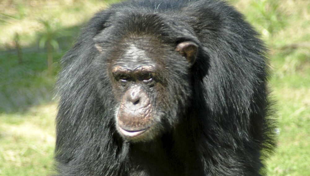 FORNØYELSESPARKER, DYREPARKER OG FAMILIEPARKER I NORGE: Julius har i alle år vært Dyreparkens største kjendis. Foto: FOTO: Dyreparken
