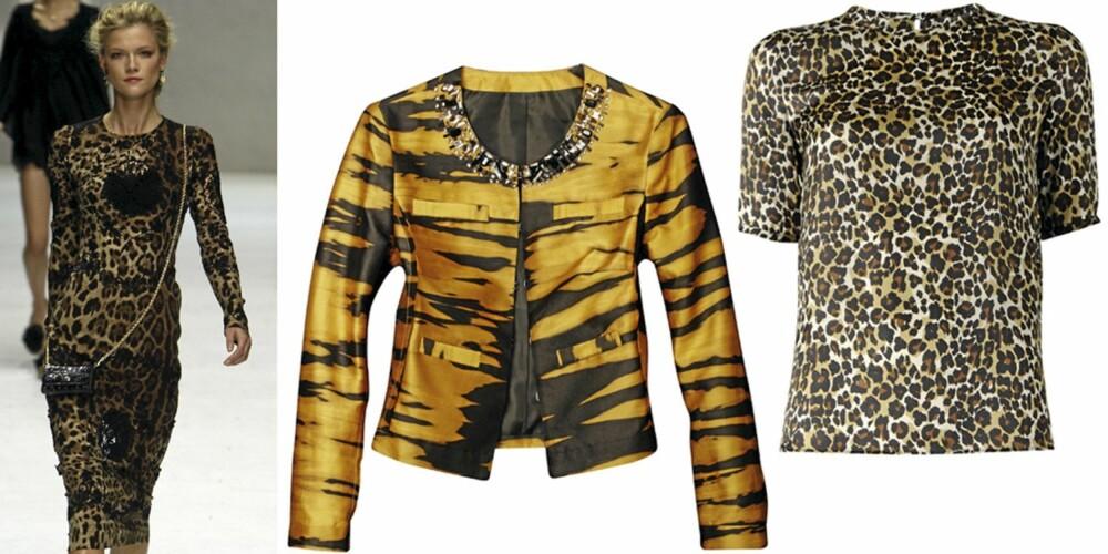 DYREPRINT: På catwalken til Dolce & Gabbana, jakke fra H&M (kr 599), topp fra Mango (kr 449).