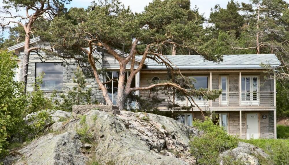HYTTE TILPASSET TERRENGET: Naturen har fått være med og legge føringer for hyttas utforming.