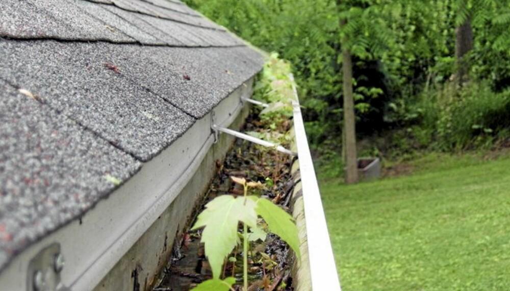 """RENSE TAKRENNEN: Høsten er den rette tiden for å rense takrennen, fordi kombinasjonen av oppsamlet løv og frosset vann kan gi sprengte rør og skader. Foto: <a href=""""http://flickr.com/photos/31442518@N08/3618763141/sizes/o/in/photostream/"""">soylentgreen23</a> på Flicker.com. Noen <a href=""""http://creativecommons.org/licenses/by/2.0/deed.en_GB"""">rettigheter</a> reservert."""