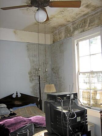 DÅRLIG INNEKLIMA: Fukt fører lett til mugg. I dette tilfellet er hele veggen og taket ødelagt. Soppsporer fra muggen gjør deg raskt syk.