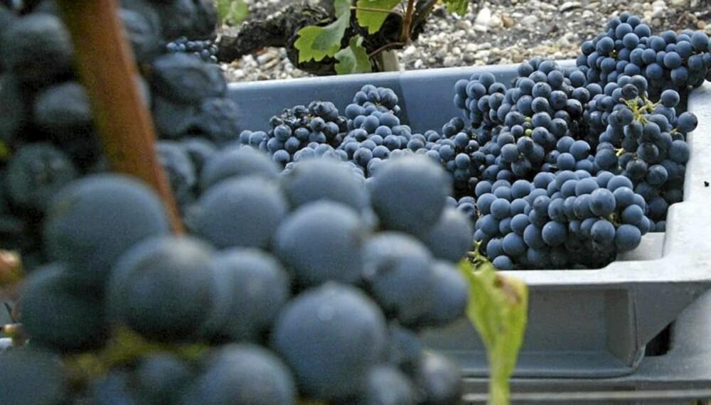 PROANTOCYANIDINER: Rødvin inneholder stoffer som hindrer bakterier fra å angripe tannemaljen.