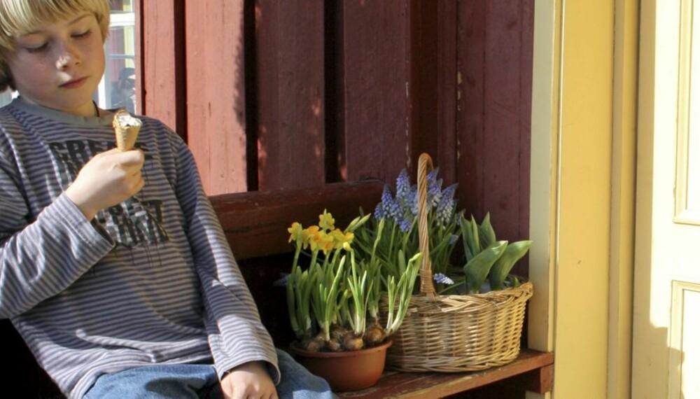 LØKBLOMSTER: Perleblomst og narcisser står fint ute på vårdagene.