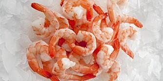 REKER: Sjømat regnes blant matvarene som gir de «beste» proteinene.