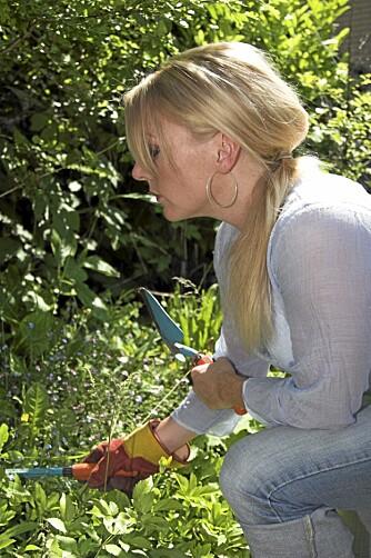 JEVNLIG LUKING: For å holde ugresset unna hagen og plenen må du luke jevnlig.