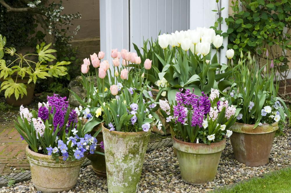 HUSK BLOMSTERKRUKKENE: Er det én ting du må huske, så er det å vanne blomsterkrukkene før du drar på feire.