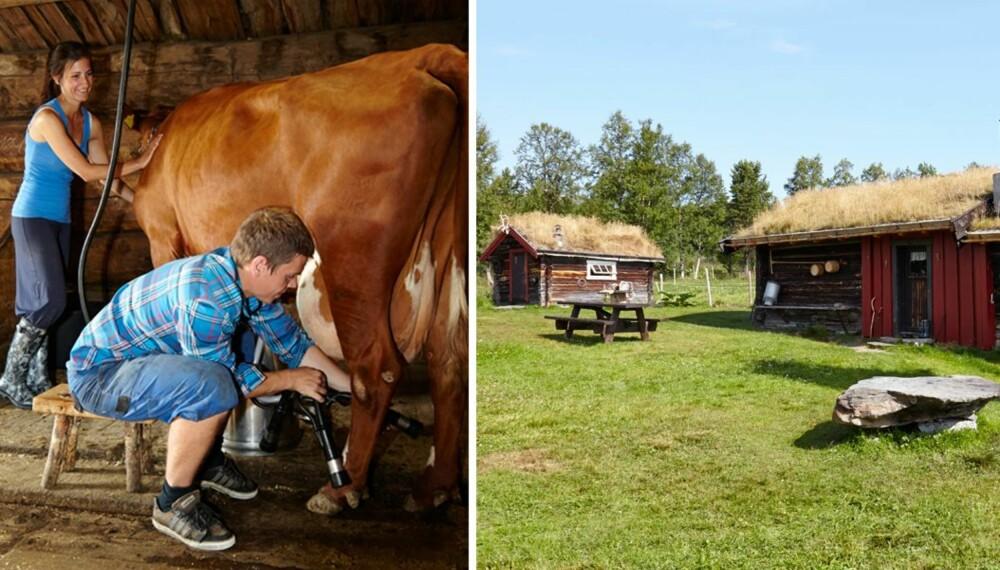 MELKER TO GANGER OM DAGEN: Øistein og Inga melker kyrne morgen og kveld. Annekset ble bygget i 1850, og det ble brukt til avkjøling til melk. På midten av 1970-tallet ble det innredet til sovebu.
