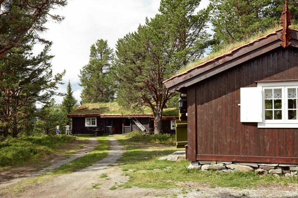 TUNET I SKOGEN: Skogen omkranser hyttetunet og gjør det til et lunt sted. Foran ligger gamlehytta, og vinduet vi ser på bildet er inn til kjøkkenet.