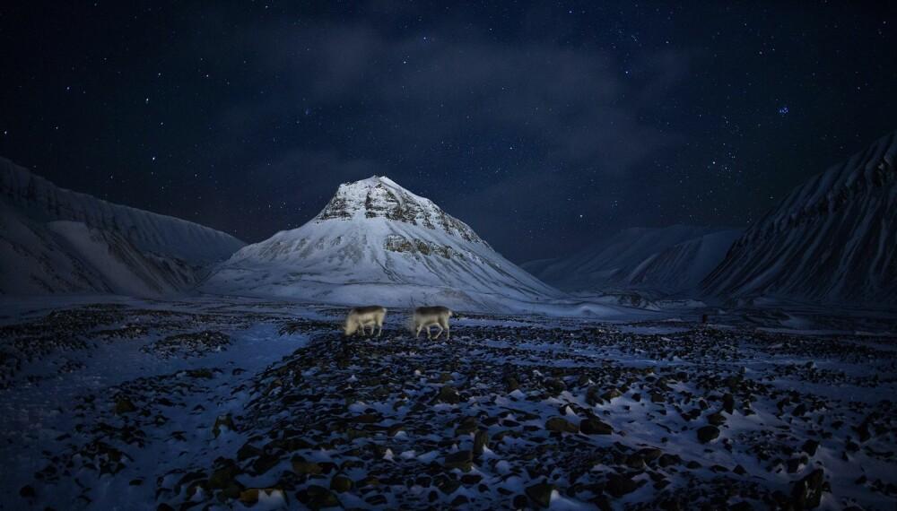 """Gullbildet """"Svalbardrein"""" av Thomas Mørch ble kåret til Månedens bilde."""