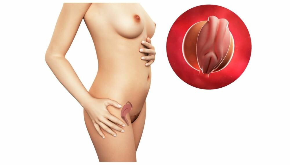 GRAVID UKE 4: Slik ser det ut i magen din etter fire uker.