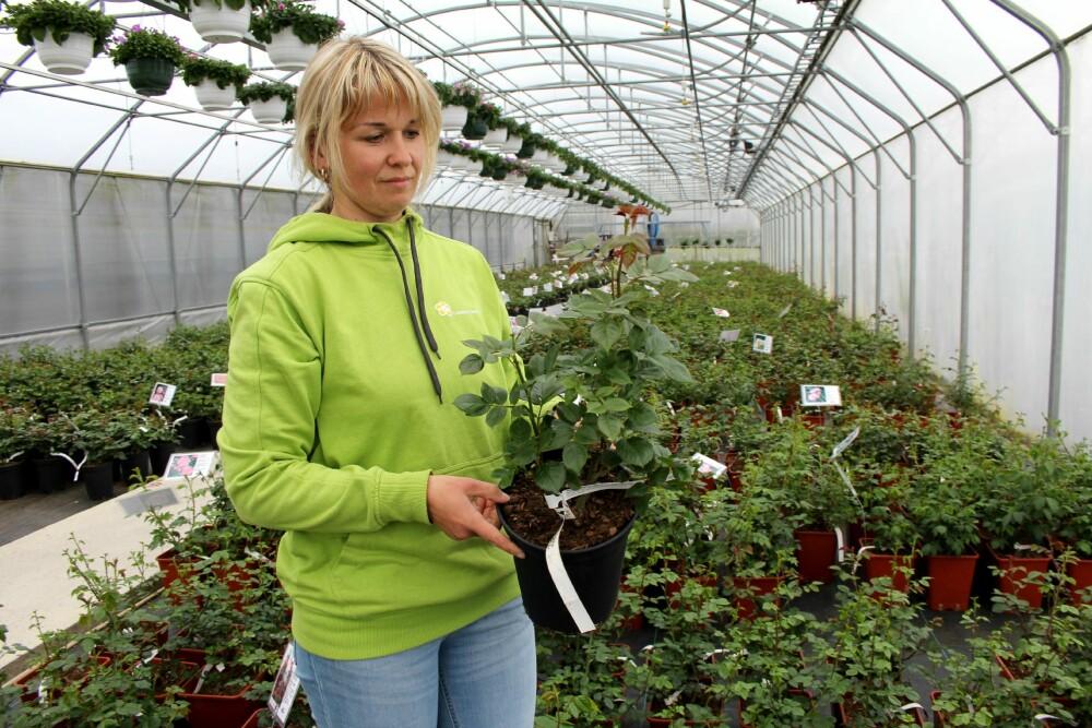 LUNDEBY GARTNERI: Ved Lundeby gartneri i Råde i Østfold har de stort utvalg av roser, også sorter som trives i skyggen.