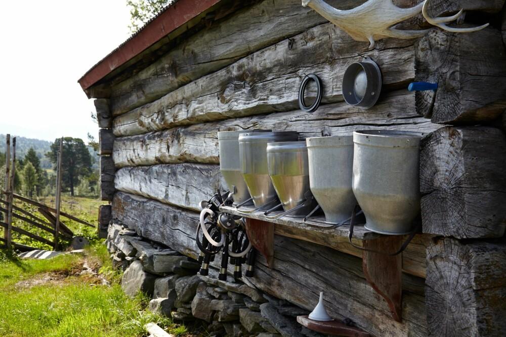 GAMLEFJØSET HOLDER FORTSATT: Fjøset fra 1786 er fortsatt i bruk. Det besto opprinnelig av 14 båser. Siden kyrne er større i dag, er det nå maksimalt plass til åtte.
