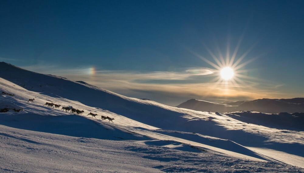 """Øyvind Dyrdals """"Reinsdyr"""" fikk gull og ble kåret til """"månendens bilde""""."""