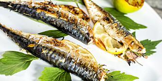OPPSKRIFT PÅ GRILLET MAKRELL: Sånn blir du en mester til å grille fisk!