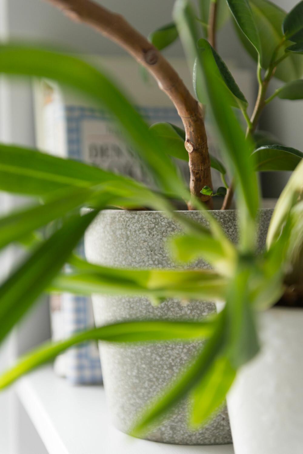 Grønt på hylla. Hylle ved vinduet. Hyllen på veggen til høyre benyttes til kokebøker og klorofyll.