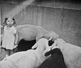 KOS: Lille Gitte i dyrehagen i Berlin før krigen. Siden skulle det bli mindre barnlig lek.