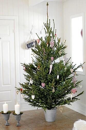 21.09.2010. Anettes hus julereportasje. Juletre i sinkbøtte.