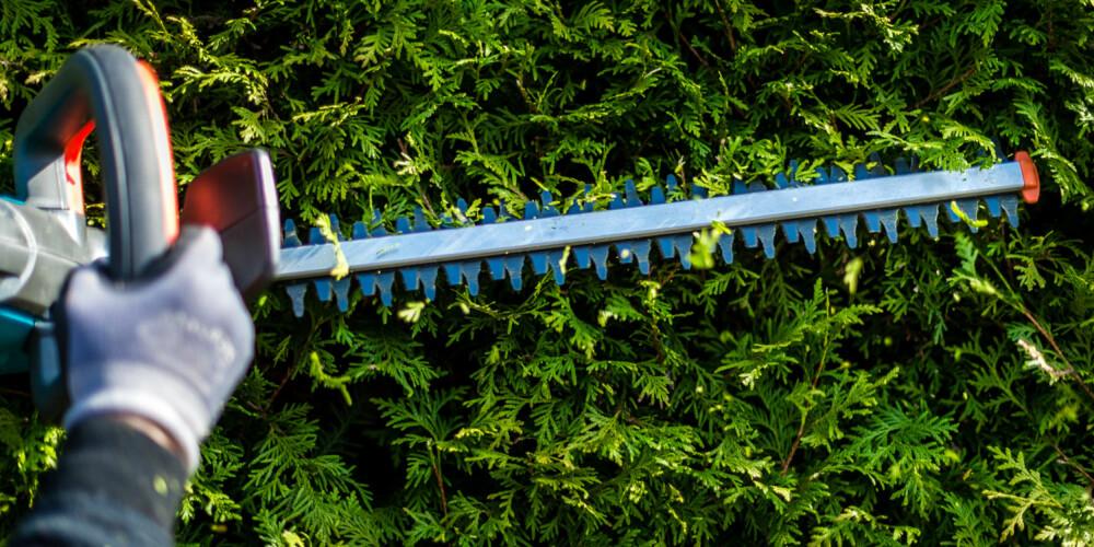 KJEKT REDSKAP: Med en elektrisk hekksaks sparer du veldig mye tid sammenlignet med å klippe hekken for hånd.