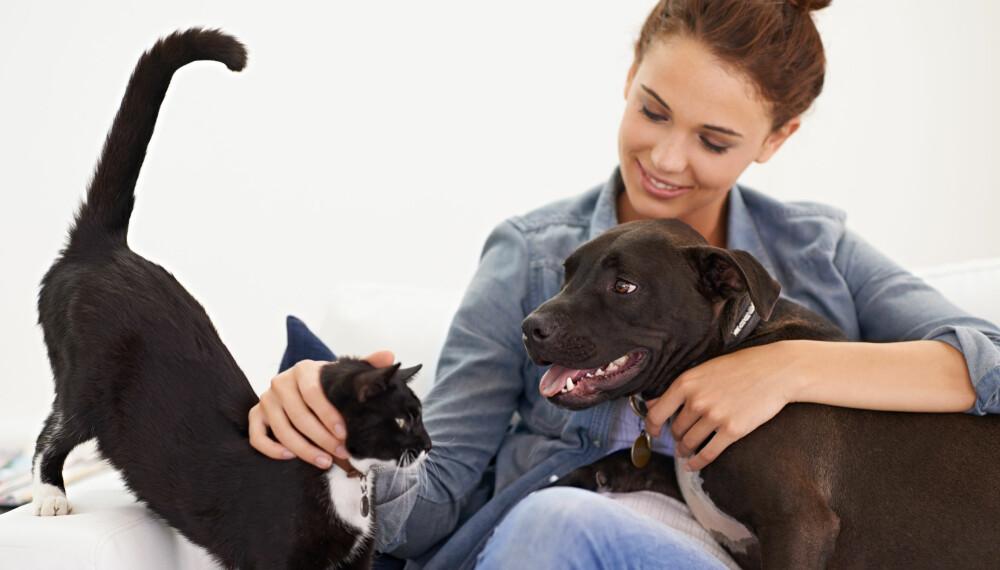 ALLERGI MOT HUND ELLER KATT: Mistenker du allergi mot hund, katt, hest eller andre pelsdyr? Foto: Getty Images