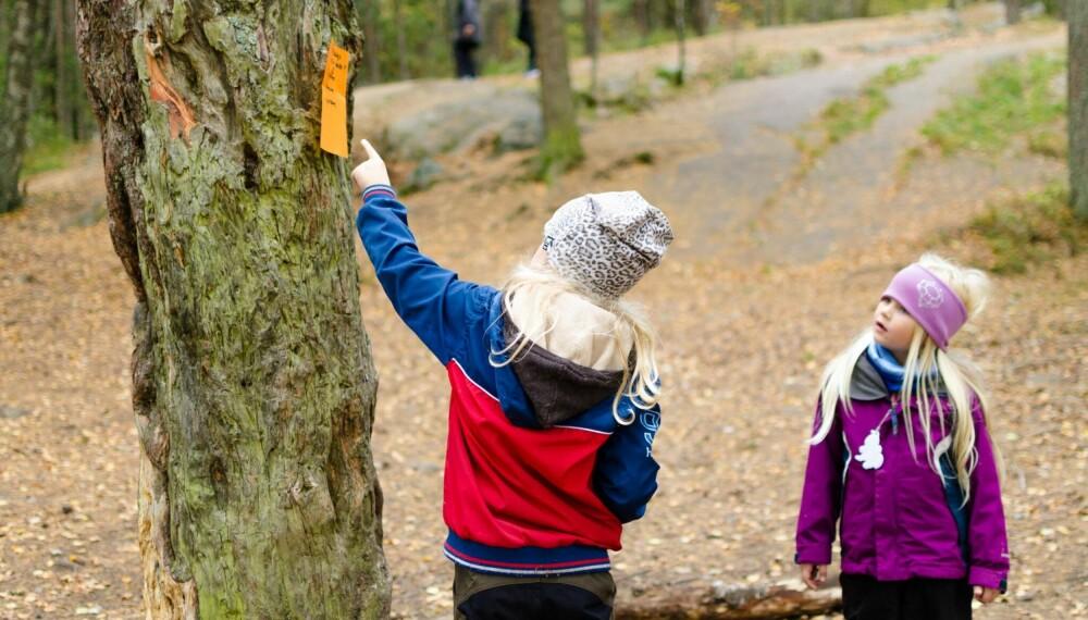 NATURSTI FOR BARN: En natursti er perfekt som en morsom aktivitet i en utebursdag, på en aktivitetsdag eller bare som en hyggelig helgeaktivitet. FOTO: Tanja Reine.