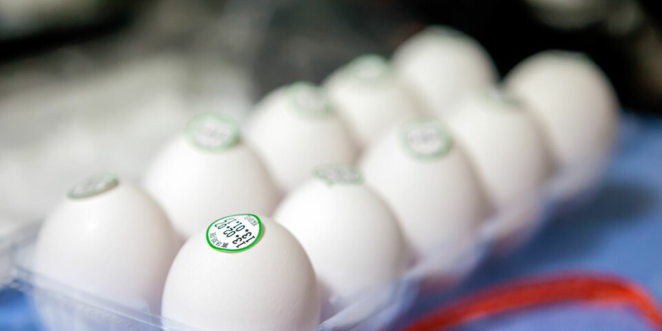 HOLDBARHET PÅ EGG: Selv om eggene går ut på dato betyr ikke det at de er dårlige. FOTO: Getty Images