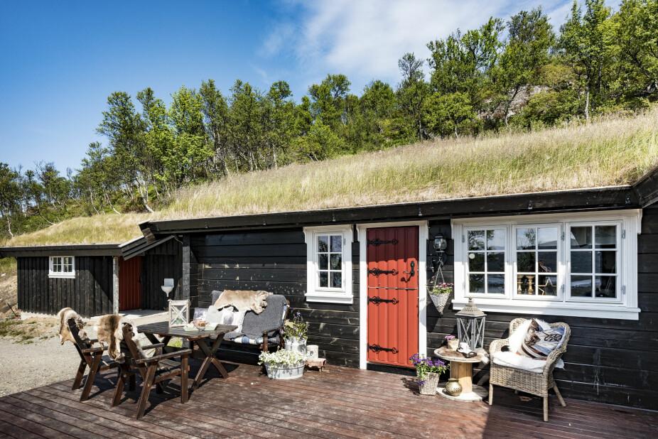 Naturlig. Torvtaket på hytta gjør at den går mer i ett med omgivelsene. Familien ønsket seg at hytta ikke skulle skille seg ut i terrenget.