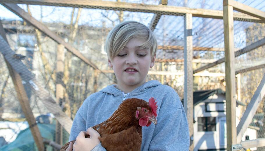 Sander synes det er godt selskap i hønene. Pluss at de gir masse gode egg hver eneste morgen!