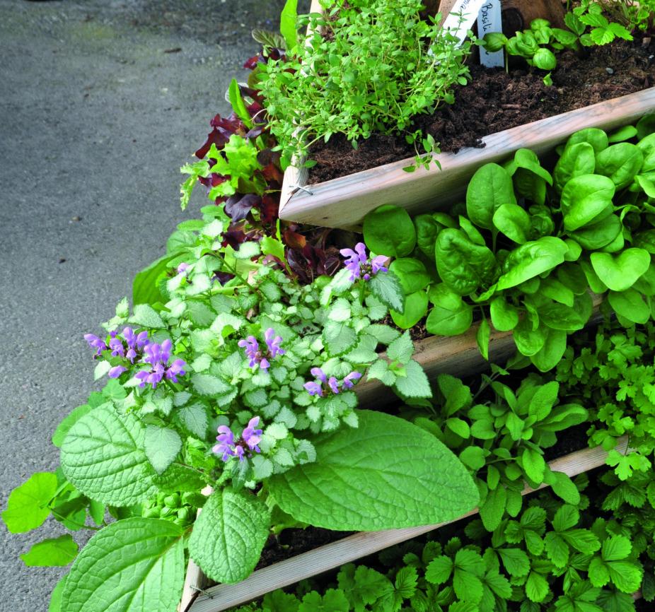 PYRAMIDE: Krydderurter kan også plantes i bed og pallekarmer. Her ser vi en plantekasse bygget som en pyramide, plantet med tvetann, jordbær, småsalat, timian og oregano.