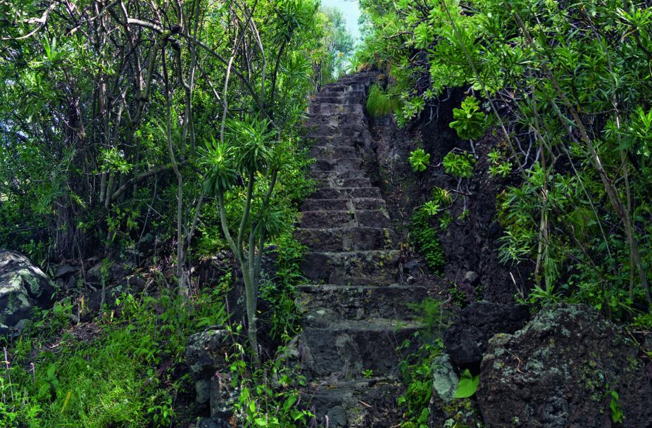 GRØNT PARADIS: Den botaniske hagen på Gran Canaria kan være verdt et besøk.