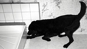 Hunden Molly snuser seg frem til skadeinsektene