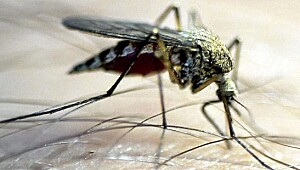 20 tips mot insektplager